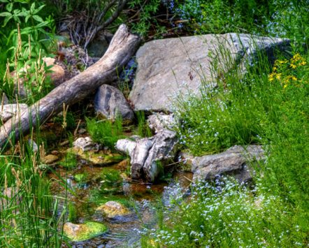 Spearfish Creek with flowers
